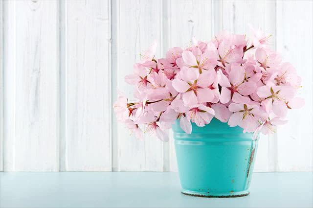 Sonhar com vaso pode significar um momento delicado para a sua saúde
