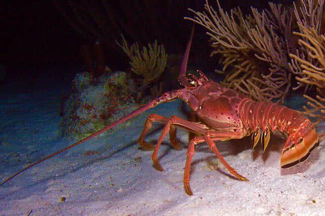 Sonhar com crustáceo pode ter significados bons ou ruins a depender do animal marinho