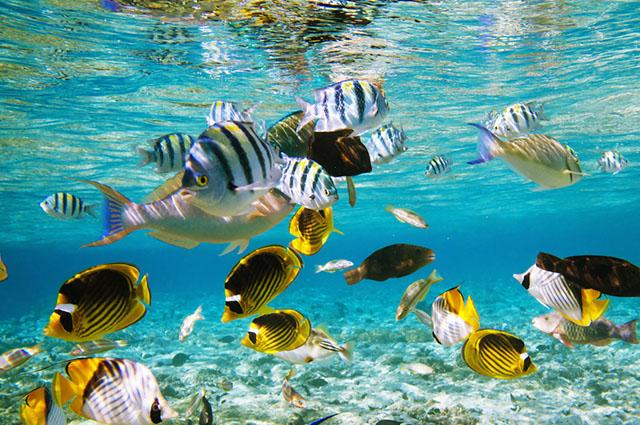 Sonhar com peixe significa boas coisas: fartura, felicidade e ganhos financeiros